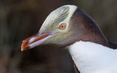 The Quacker Quiz: How much do you know about seabirds?