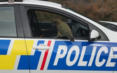 Kea slammed for shocking vandalism videos