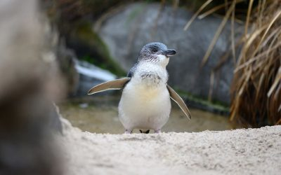 Meet the finalists for Penguin of the Year!